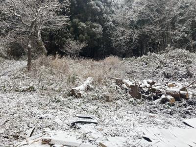 初雪とトレイルカメラの返品(小屋暮らし67日目)