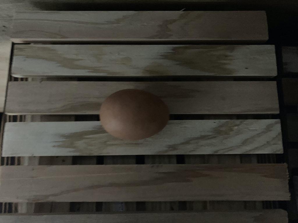 ニワトリが卵を産んだ(小屋暮らし84日目)